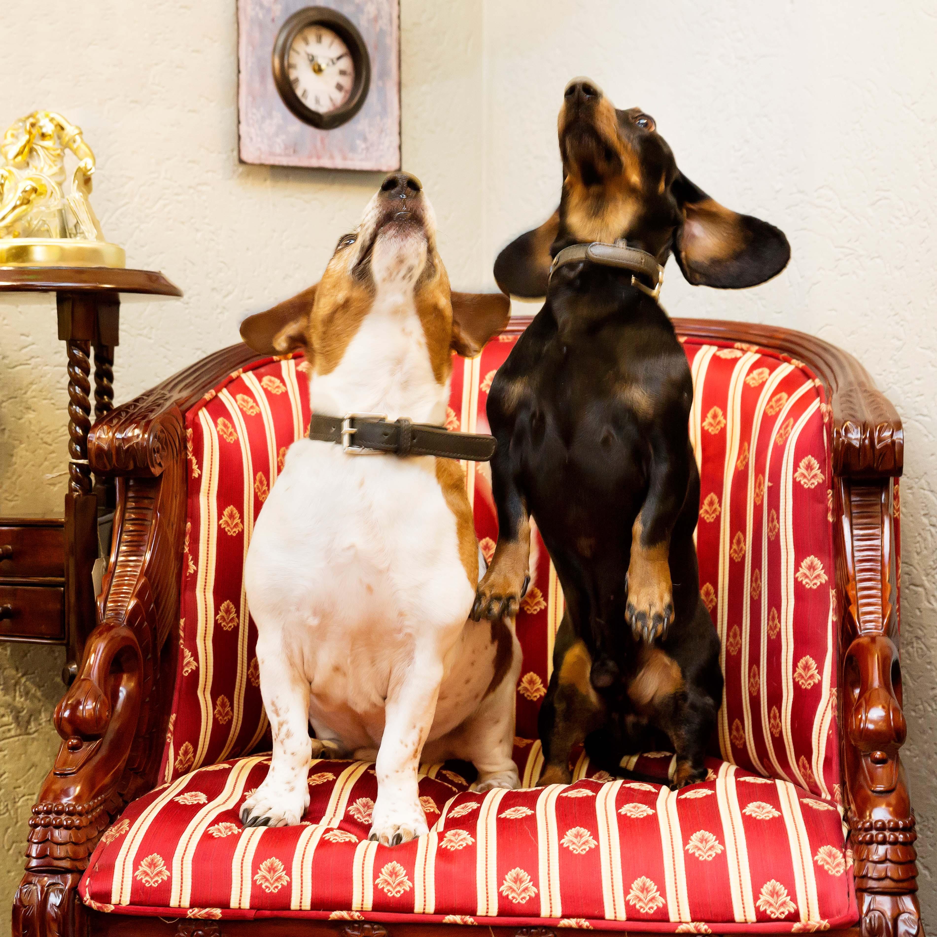 Hondjes in onze winkel